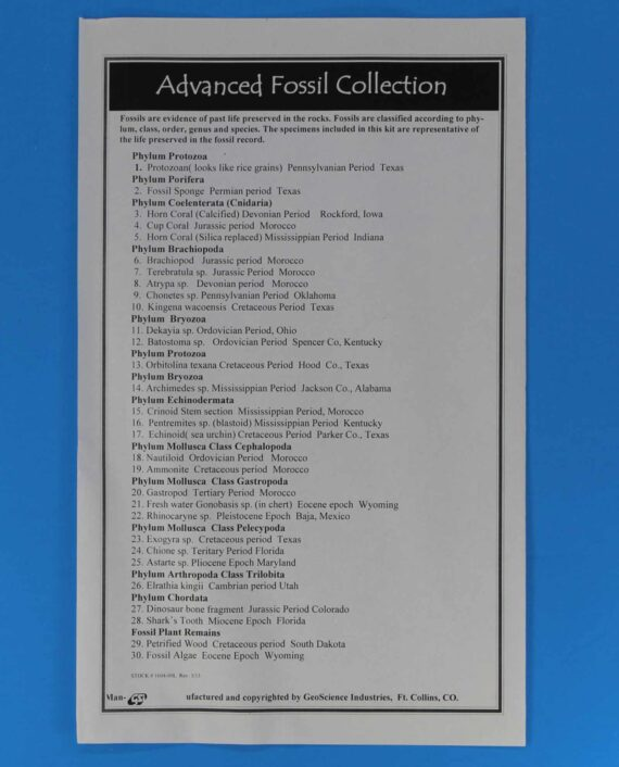15 piece fossil collection